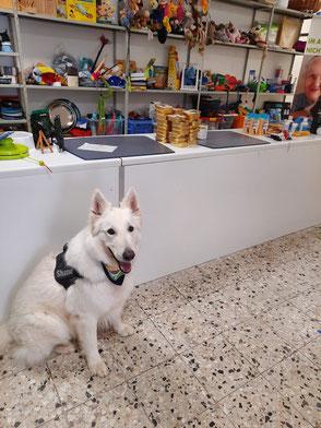 weißer Schäferhund vor Ladentheke mit Tierfutter