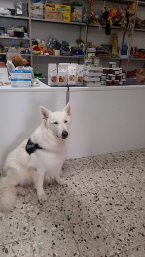 Weißer Schäferhund mit Futterspenden für die Tiertafe
