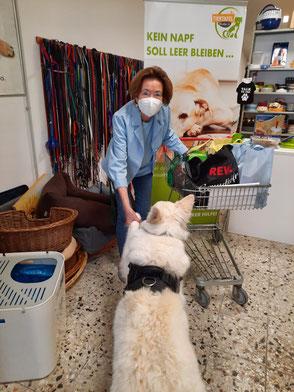weißer Schäferhund gibt Frau Pfote