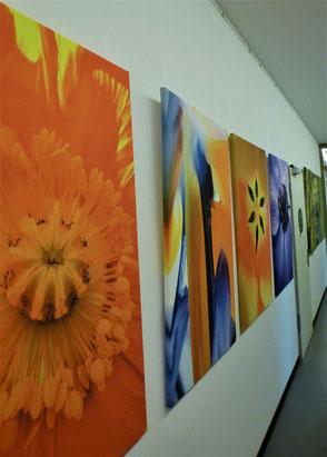 Ausstellung Vivat Lingua Tübingen
