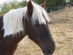 Rutas a caballo en el Centro de Aventura de Sobrón