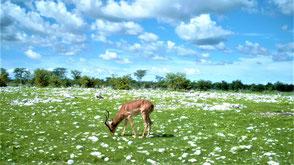 Namibia Reisetipps Etoscha Nationalpark