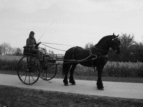 Fahren, Kutsche, Gig, Friese