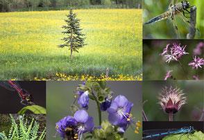 Schwarzwald, Natur, Flora und Fauna, heimische Tierwelt