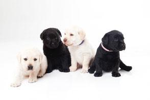 湘南ペットトレーニンググループレッスン写真