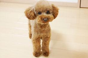 横浜ペットトレーニング子犬写真