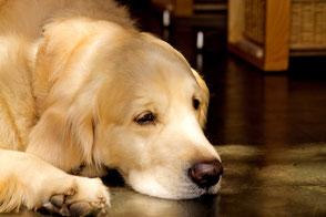 鎌倉ペットトレーニング成犬の写真