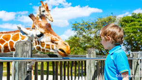 Aller au zoo de Cerza