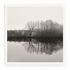 """""""Minimal Woods"""" Art Print von Lena Weisbek"""