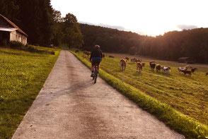 Radfahren, Hohenstein, Ödenwaldstetten, Meidelstetten, Mountainbike, Schwäbische Alb, radfahren, Haus im Gässle, Ferienwohnung