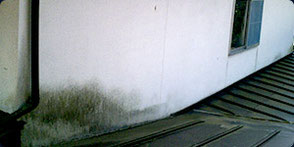 カビが発生した壁の画像