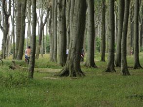 Bild: Nienhagen, Gestensterwald, www.mollisland.de