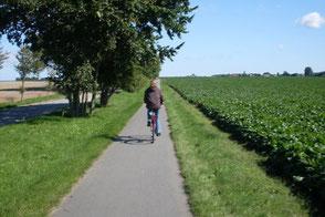 Bild: Bad Doberan, Radweg, Felder, www.mollisland.de