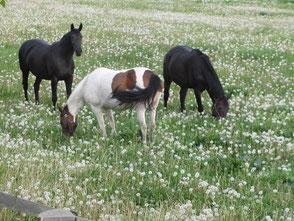 Bild: Reiten, Bad Doberan, www.mollisland.de