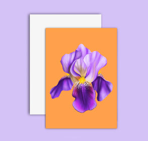 colorful iris flower illustration
