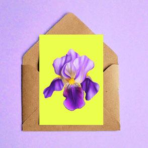 colorful iris flower illustration