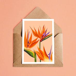 flower illustration art print birds of paradise