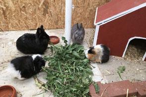 Kaninchenhotel mit artgerechter Unterbringung