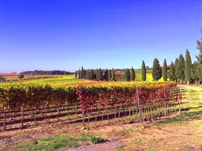Valdorcia, Toscana, Italia. Itinerari di vino. Blog Etesiaca
