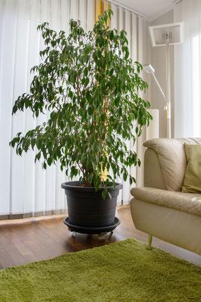 Schuetz Boden und Pflanzen, Winkel fuer Pflanzen, Halter fuer Pflanzen, Fußbodenheizung,