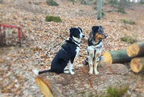 zwei Hunde auf einem Baumstamm
