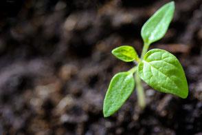 Junge grüne Pflanze kommt aus der Erde