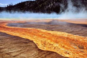 オレンジに輝く好熱性バクテリア 荻原成騎