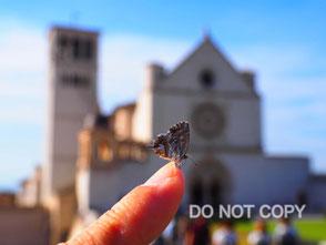 「この指とまれ」@アッシジのサン・フランチェスコ聖堂 神谷孝信