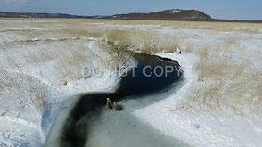 釧路湿原の動物 愛 高行