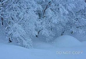 降雪の朝 西納久之