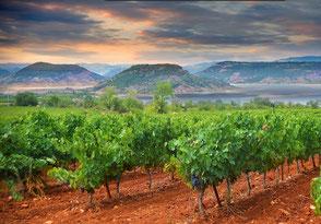 Vignes et vignobles découverte des vins du Languedoc Terrasse du Larzac oenotourisme en vélo