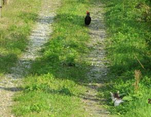 のどかな農園の風景 ねことキジ