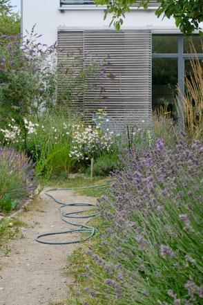 dieartige // Design Studio - #GARTEN, #nachhaltig, #Lavendel, #Prachtkerze, #Weg, #Schiebeläden, #Steppengarten, #Präriegarten, #mediterran #garden