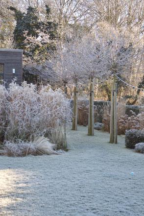 dieartige // Design Studio - #GARTEN #nachhaltig,  #Platanen #Gräser #Winter #garden