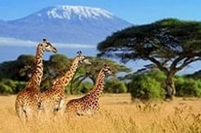 Last Minute Angebote nach Kenia