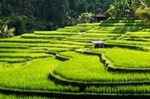 Last Minute Angebote nach Bali