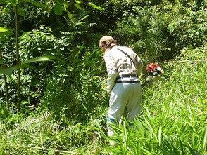 小さな池の周辺で草刈をする岡田さん