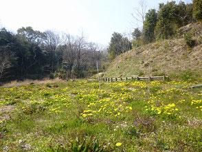 今日は暖かく野花もウグイスの声も心地よい里山