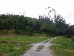 草刈りを担当している里山