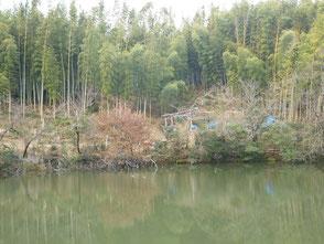 新池には沢山の水鳥が泳いでいます!