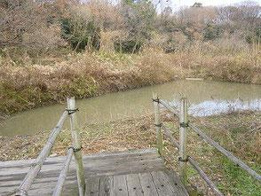 水辺の散策路には一部木道が整備されています