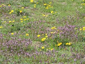 春の訪れを告げる鶯の鳴き声と草花の息吹き!