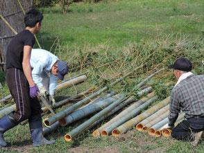 年数の経った竹を5本程切出しました!