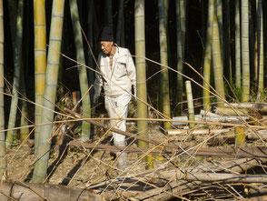 斜面から竹を引き上げる橋本さん