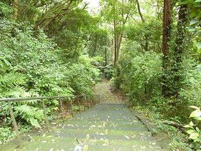 帰りに冨具神社へ 神社本殿へ上る石段