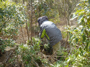 保全活動の一環で下草と雑木刈りを行いました!