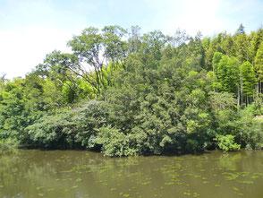 学習の森新池の風景