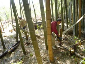 枯れて折れた竹を取り除きました