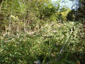 散策路周辺の竹を随分伐りました!