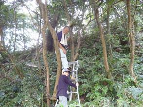 竹で作った巣箱を木の上に取付けました!
